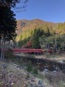紅葉の季節になりました。