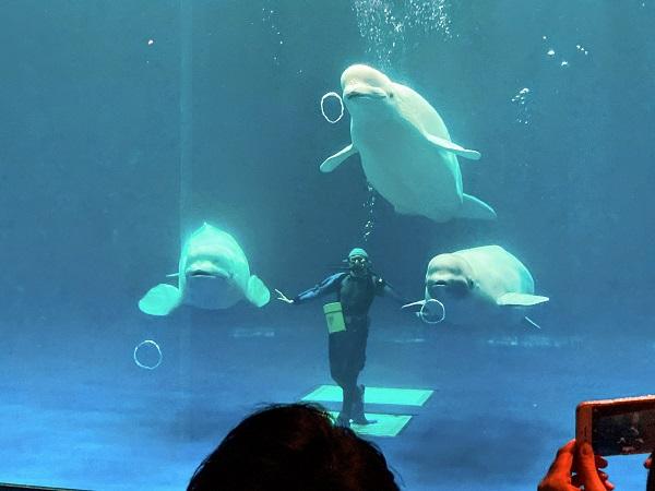 水族館に行ってきました